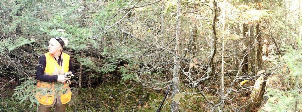 Swamp Grouse