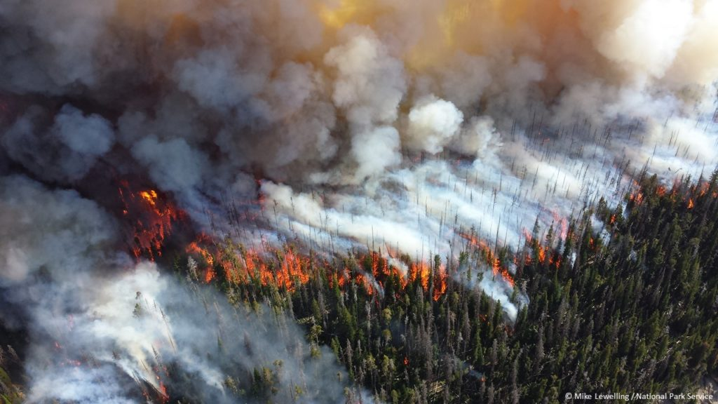 Alder Fire in Yellowstone NP 2013 credit Mike Lewelling National Park Se...