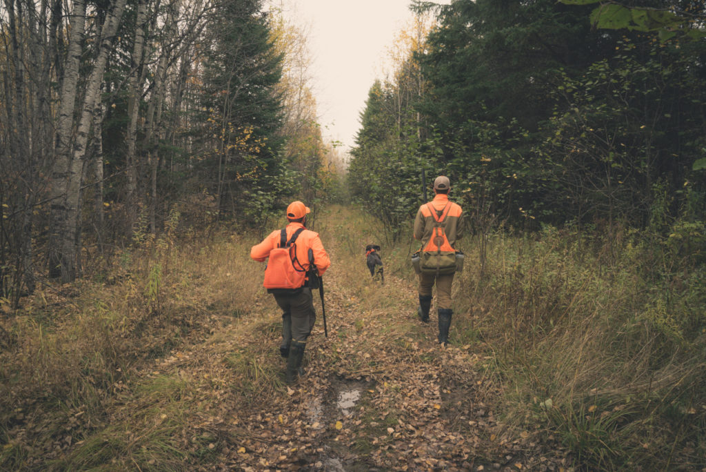 ruffed grouse hunting in Minnesota