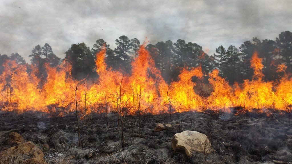 Fire habitat management