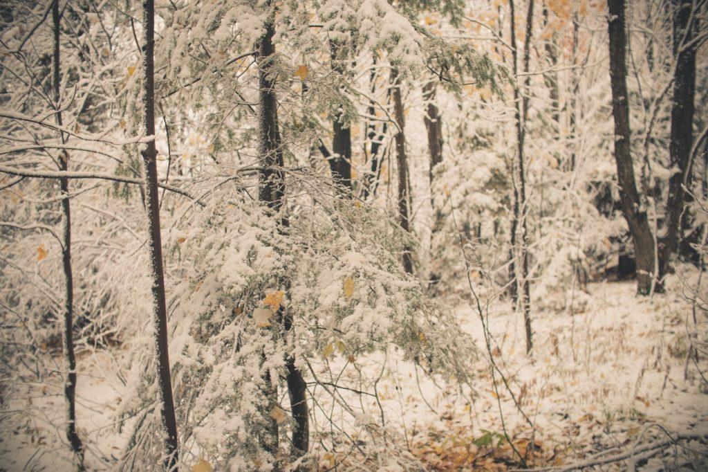 winter-grouse-habitat