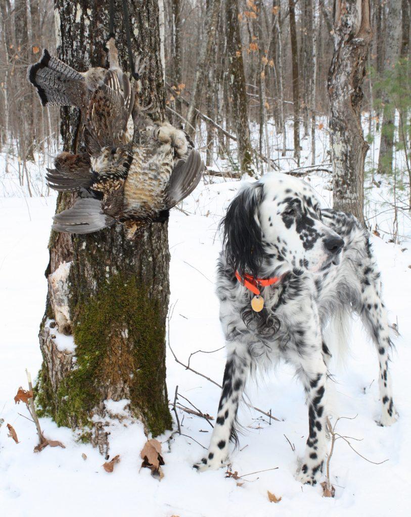 Winter-grouse-hunt