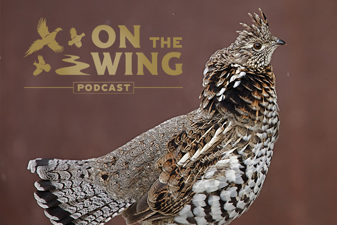 on-the-wing-podcast