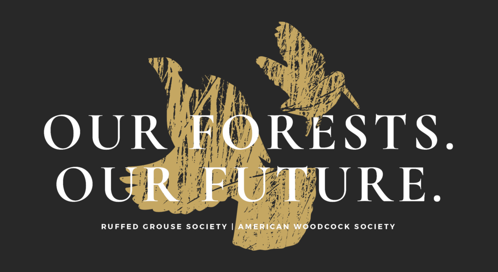 our-forests-our-future