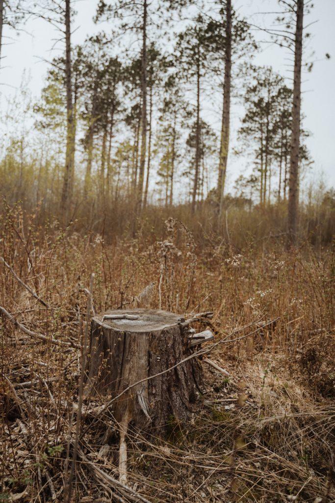 minnesota-forests