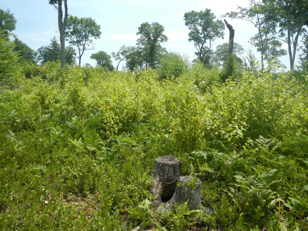 young-forest-initiative-Mongaup-Valley-WMA