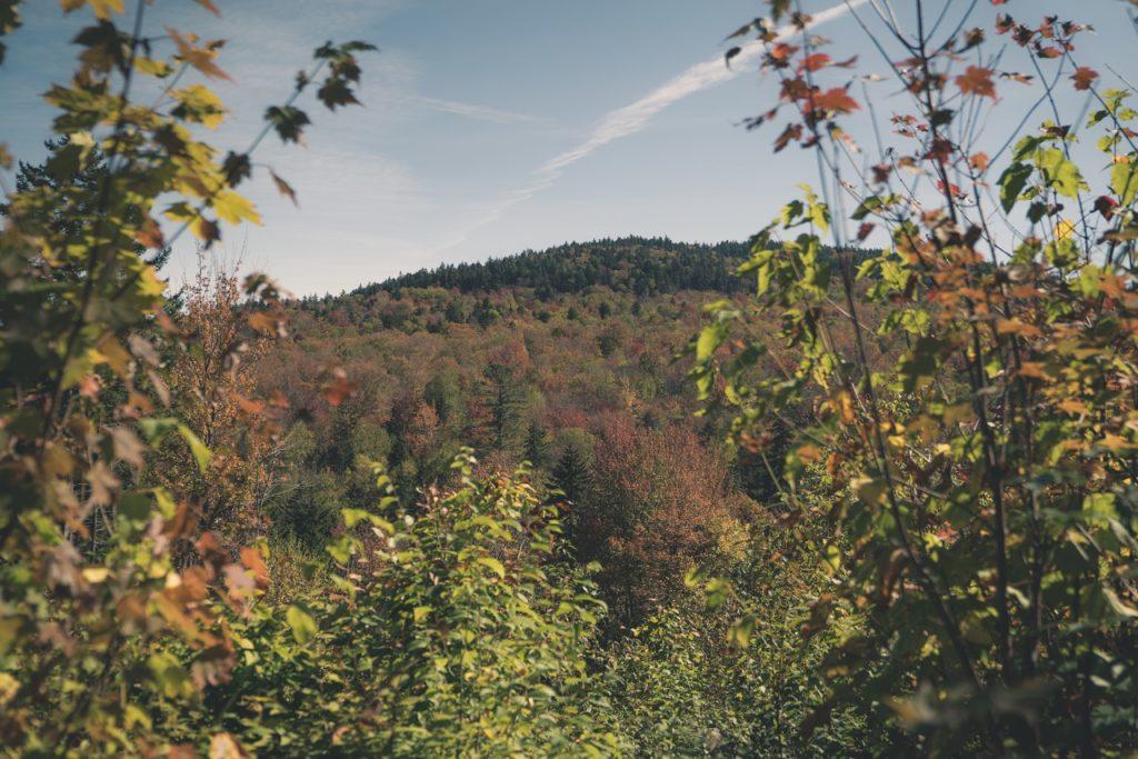 deforestation-is-not-forest-management