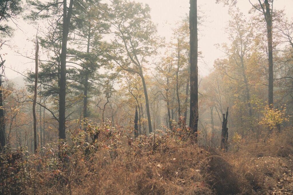grouse-habitat